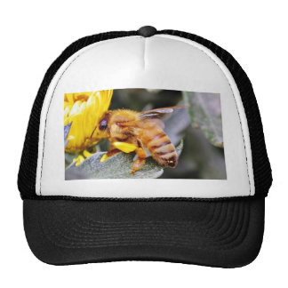Insectos 3 de las abejas gorro