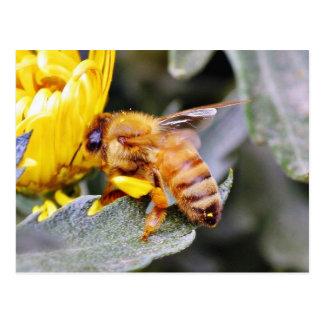 Insectos 3 de las abejas postales