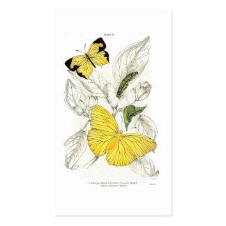 Insectos amarillos del vintage de las mariposas el tarjetas de visita
