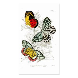 Insectos amarillos rojos del vintage de las tarjetas de visita