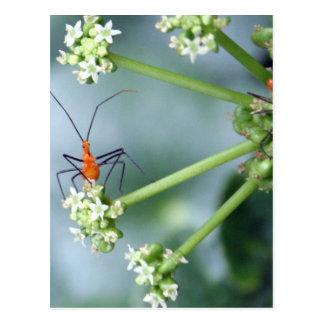 Insectos anaranjados postales