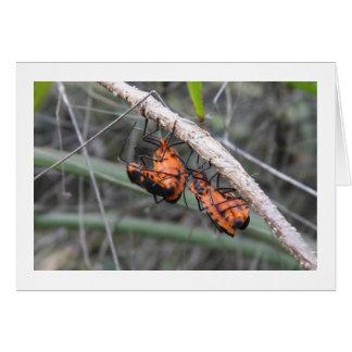 Insectos anaranjados tarjeta de felicitación