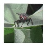 Insectos/arácnidos de la fauna de Idaho del barran Azulejos Cerámicos