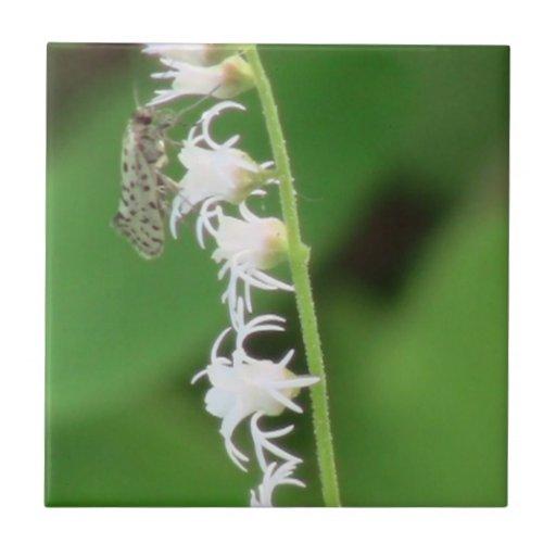 Insectos/arácnidos de la fauna de Idaho del barran Azulejo Cerámica
