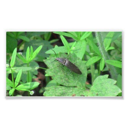 Insectos/arácnidos de la fauna de Idaho del barran Arte Fotográfico