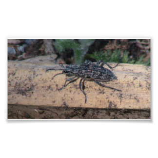 Insectos/arácnidos de la fauna de Idaho del barran Fotografia