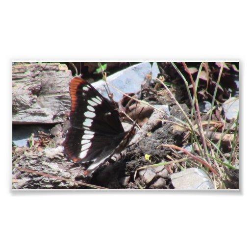 Insectos/arácnidos de la fauna de Idaho del barran Fotografía