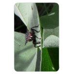 Insectos/arácnidos de la fauna de Idaho del barran Iman De Vinilo