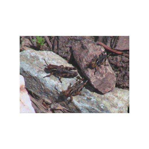 Insectos/arácnidos de la fauna de Idaho del barran Lienzo Envuelto Para Galerías