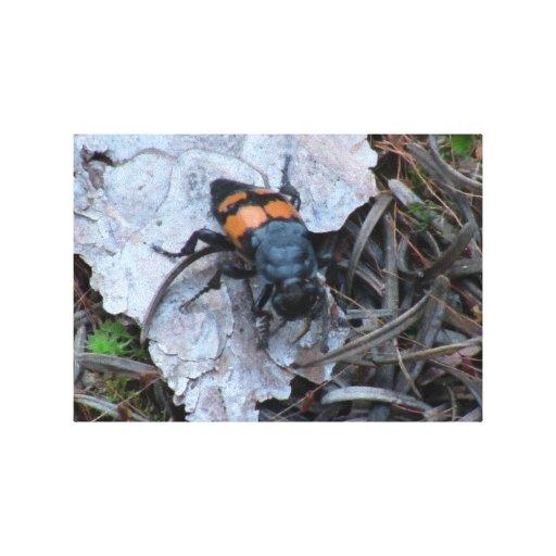 Insectos/arácnidos de la fauna de Idaho del barran Impresión En Lienzo Estirada