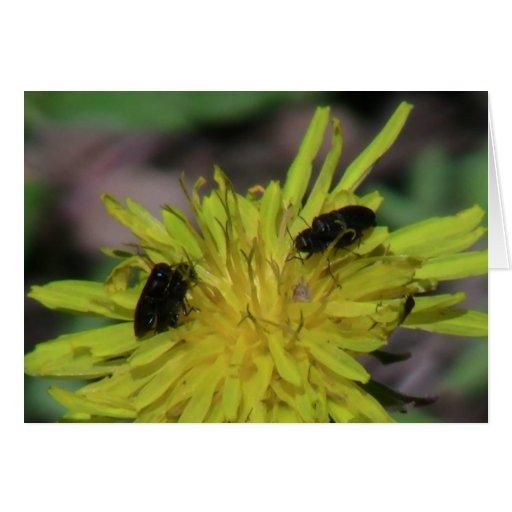 Insectos/arácnidos de la fauna de Idaho del barran Tarjeta De Felicitación
