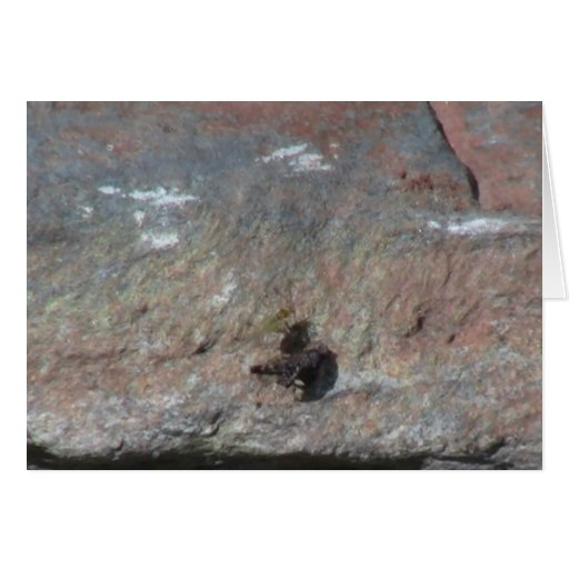 Insectos/arácnidos de la fauna de Idaho del barran Tarjetas