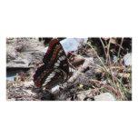 Insectos/arácnidos de la fauna de Idaho del barran Tarjetas Fotográficas