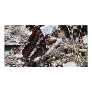Insectos/arácnidos de la fauna de Idaho del barran Tarjeta Personal