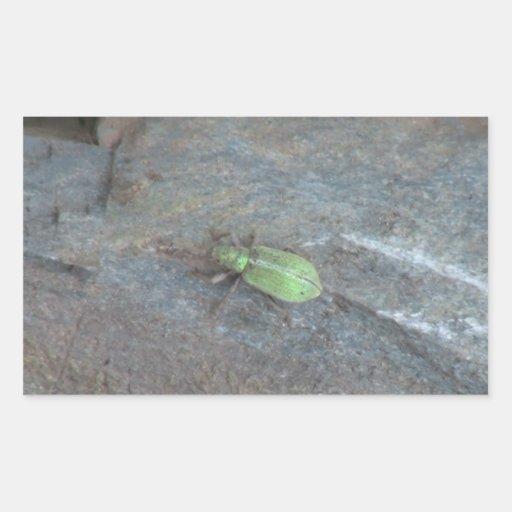 Insectos/arácnidos de la fauna de Idaho del Rectangular Pegatina