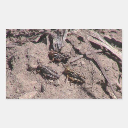 Insectos/arácnidos de la fauna de Idaho del Pegatina Rectangular