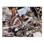Insectos/arácnidos de la fauna de Idaho del Postal