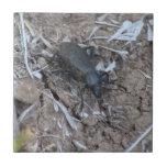 Insectos/arácnidos de la fauna de Ishawooa Wyoming Tejas Cerámicas