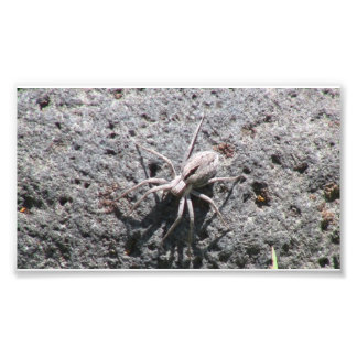 Insectos/arácnidos de la fauna de Ishawooa Wyoming Fotografia