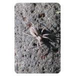 Insectos/arácnidos de la fauna de Ishawooa Wyoming Imán Flexible