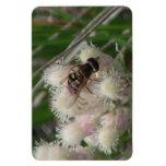 Insectos/arácnidos de la fauna de Ishawooa Wyoming Iman