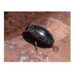 Insectos/arácnidos oscuros de Utah del barranco Postal