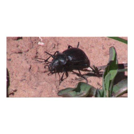 Insectos/arácnidos oscuros de Utah del barranco Tarjetas Personales