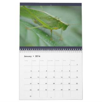 ¡Insectos! Calendario