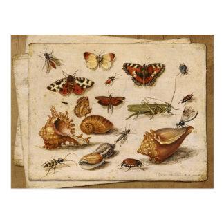 Insectos, cáscaras y mariposas tarjeta postal