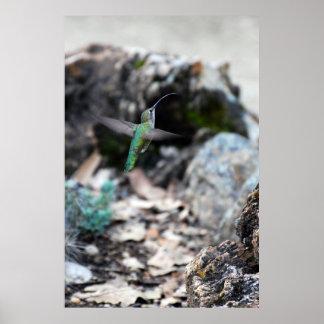 Insectos de cogida póster