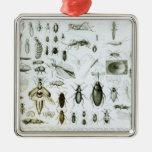 Insectos de la entomología ornatos