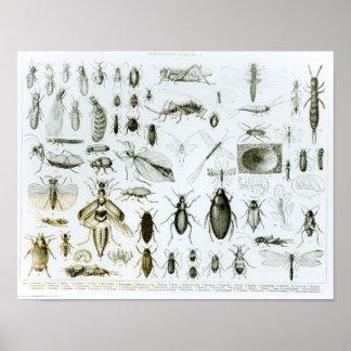 Insectos de la entomología poster
