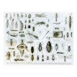 Insectos de la entomología tarjeta postal