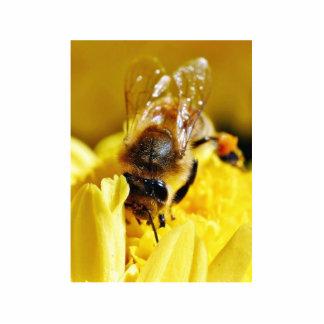 Insectos de la macro de las alas de los insectos d fotoescultura vertical
