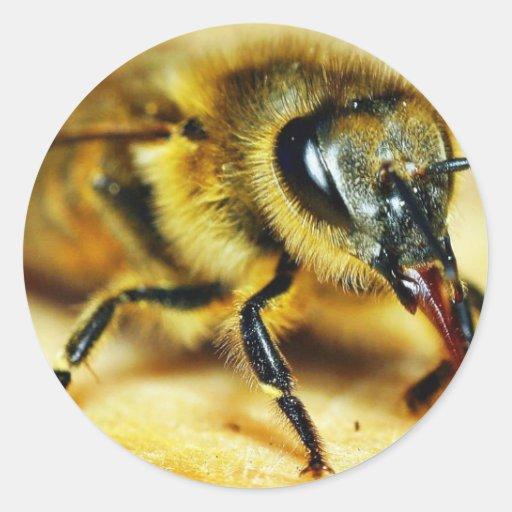 Insectos de las abejas etiqueta redonda