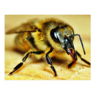 Insectos de las abejas postal