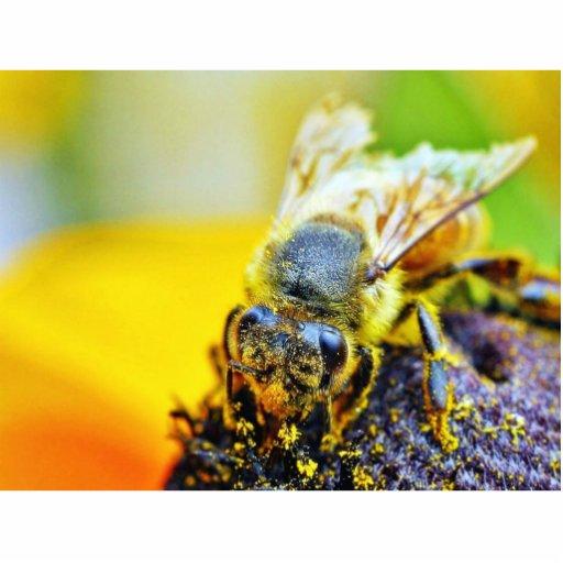 Insectos de los insectos de Pollenating de las abe Fotoescultura Vertical