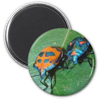 insectos del harlequin del algodón imán redondo 5 cm