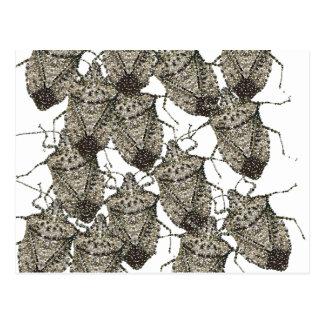 Insectos del hedor bedazzled tarjetas postales