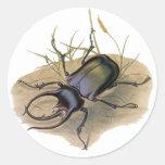 Insectos del vintage, insectos, escarabajo de pegatina redonda