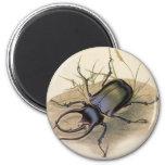Insectos del vintage, insectos, escarabajo de rino iman de nevera