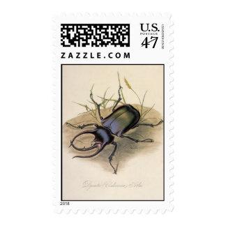 Insectos e insectos, escarabajo del vintage de sellos postales