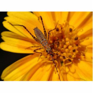 Insectos en macro anaranjada grande de la flor escultura fotografica