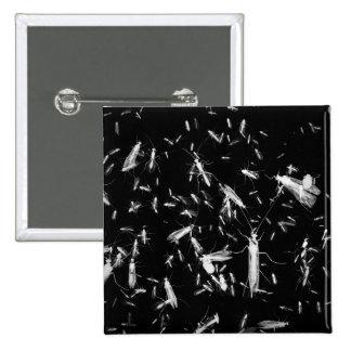 Insectos en negro pin cuadrado
