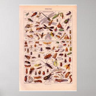 Insectos históricos del vintage   1920 poster