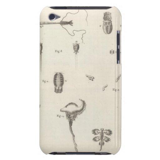 Insectos iPod Case-Mate Cárcasas