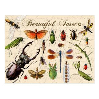 Insectos - los organismos más diversos de la postal