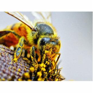 Insectos macros del polen de las abejas escultura fotografica
