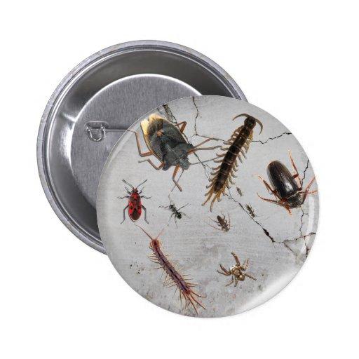 ¡Insectos por todas partes! Pin
