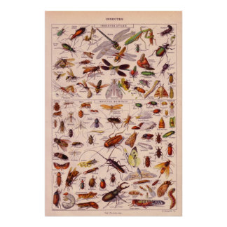 Insectos Póster